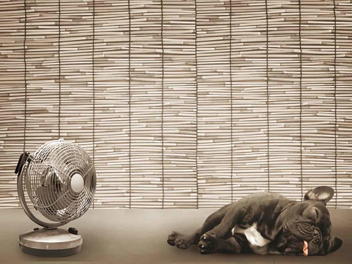 「本日の最高気温は63度でしょう」2021年6月米国ワシントン州で記録!【適材適食】小園亜由美(管理栄養士・野菜ソムリエ上級プロ)糖尿病専門・甲状腺専門クリニック勤務@福岡姪浜・福岡天神
