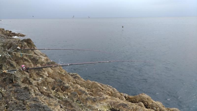 錦 乗越 石鯛釣り