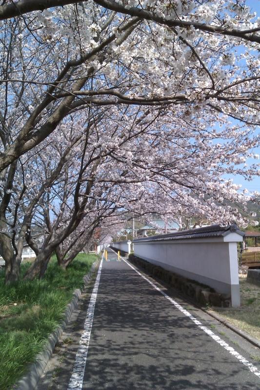 f:id:ksrmx_in_japan:20110409150352j:image:w360