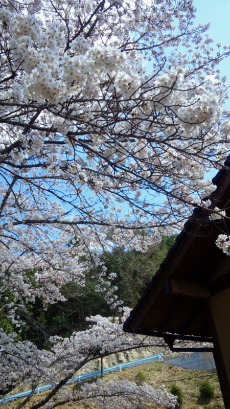 f:id:ksrmx_in_japan:20120414120700j:image:w360
