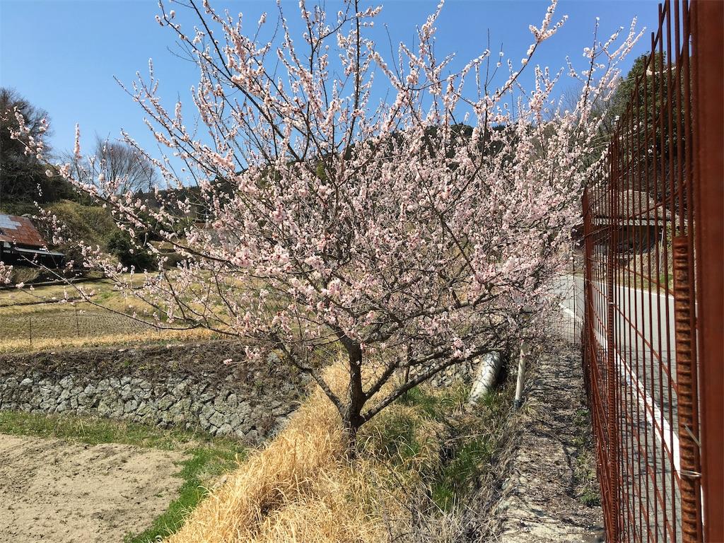 f:id:ktakagaki:20170403173914j:image