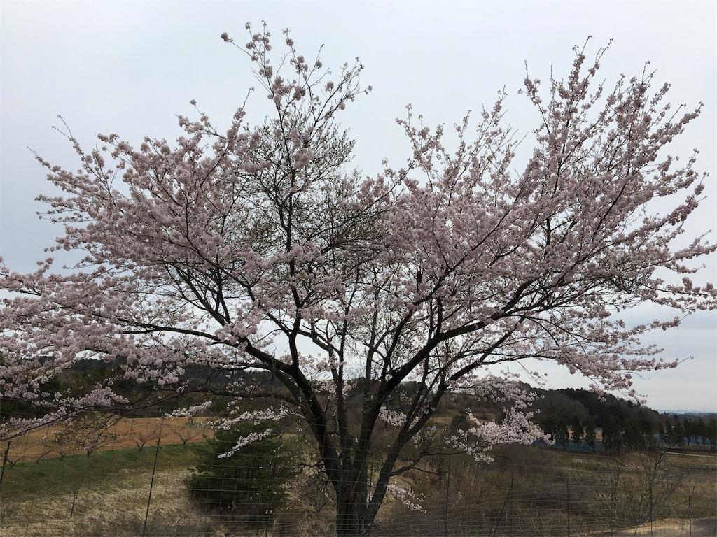 f:id:ktakagaki:20170410173853j:image