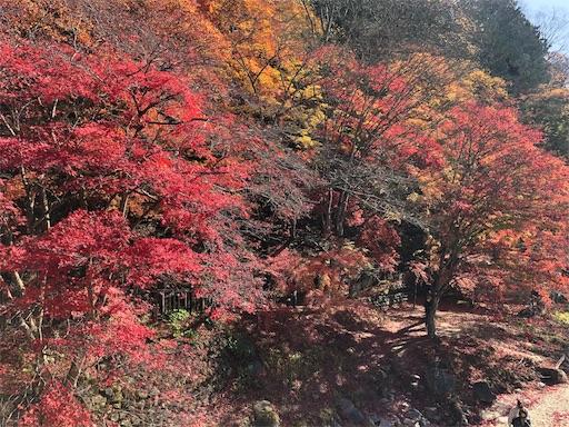 f:id:ku-cha-yuki:20201205131507j:image
