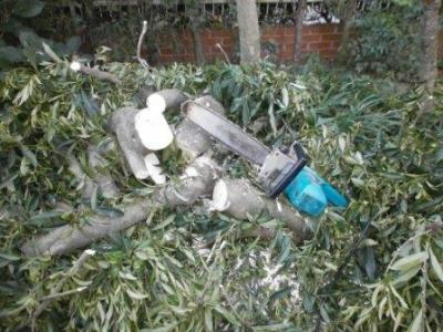 樹木の切断08.JPG