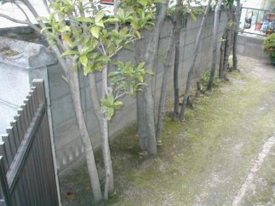 ブロック塀修理前03内部植木付近.JPG