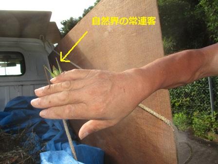 f:id:kubataasisuto:20210410130114j:plain