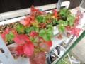 イチゴの紅葉