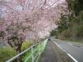 桜マラソン