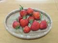 今日の収穫イチゴ