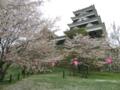 大洲城の花見