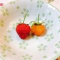 イチゴとラズベリーの初収穫