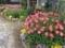 今朝の花壇