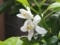 ナツミの花