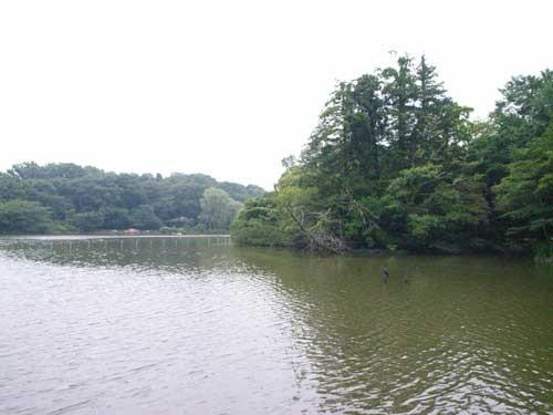 f:id:kubohashi:20090717220728j:image