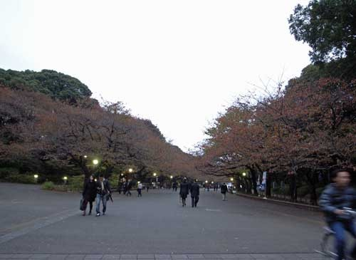 f:id:kubohashi:20091123233742j:image