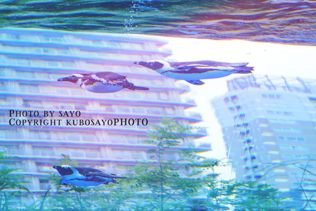f:id:kubosayoPHOTO:20170904094938j:plain