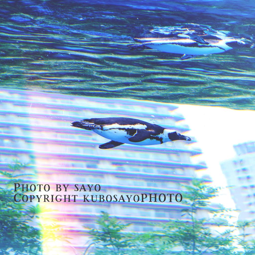 f:id:kubosayoPHOTO:20170904095651j:plain