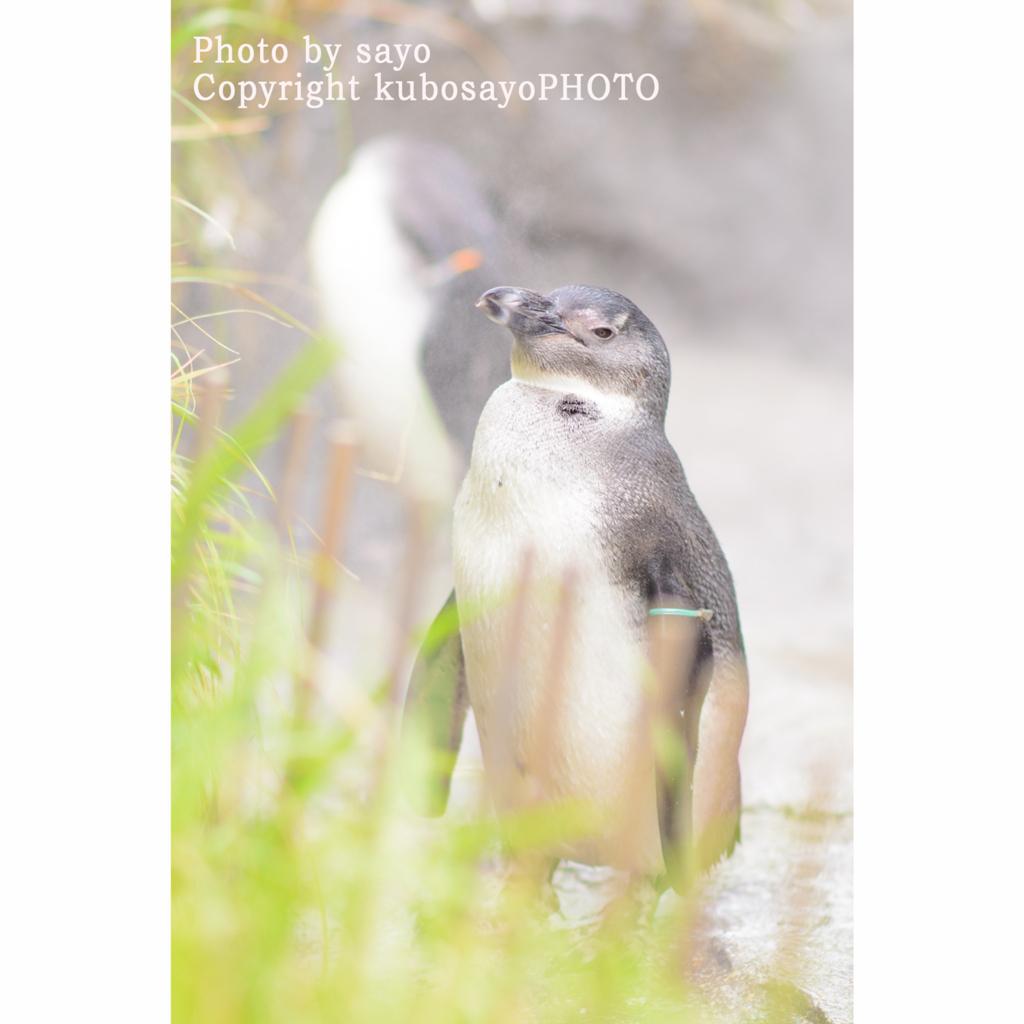 f:id:kubosayoPHOTO:20170904100155j:plain