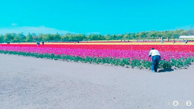 f:id:kubotamiyabi1005:20170506103634j:image