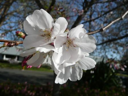 f:id:kuboyumi:20100326094215j:image