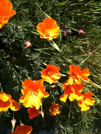f:id:kuboyumi:20100327164143j:image