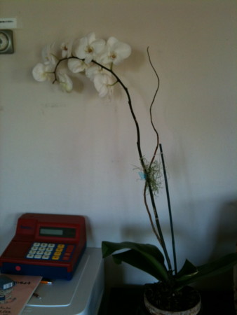 f:id:kuboyumi:20100403152620j:image