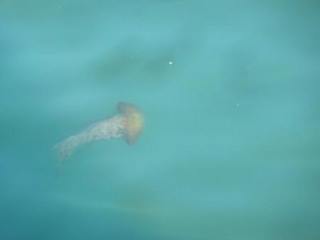 f:id:kuboyumi:20111224130809j:image