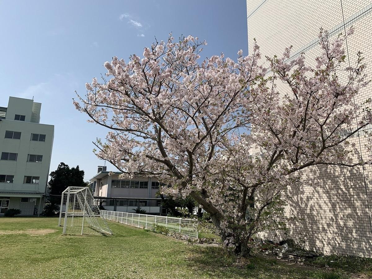 f:id:kuchinotsu:20210406175949j:plain