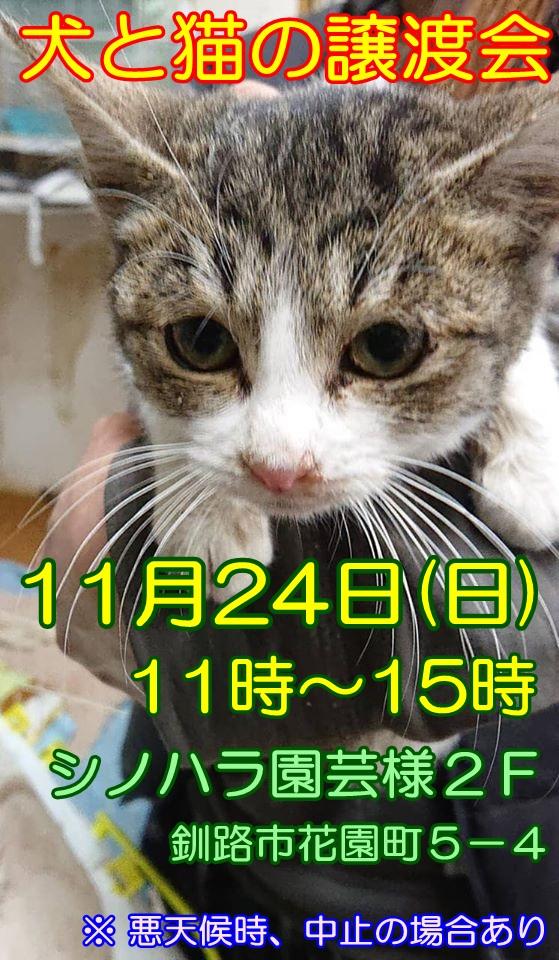 f:id:kugatsusuiyou:20191120214907j:plain