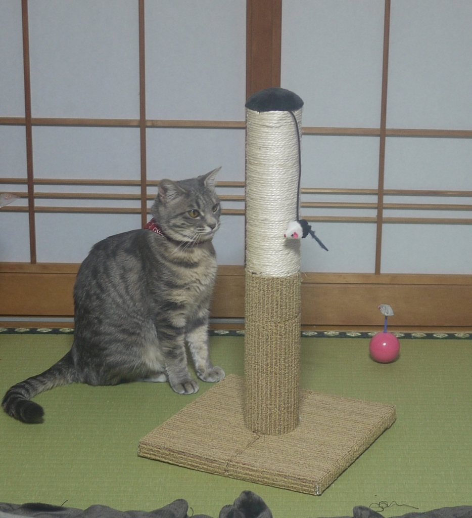 f:id:kugunarihama:20190218173621j:plain