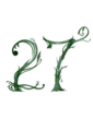 27° 植物