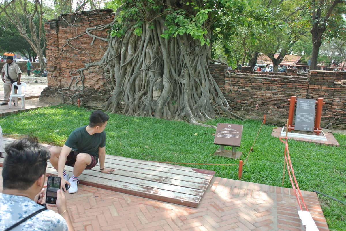 ワットプラマハタート 木の根に覆われた仏頭
