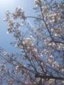 """泥亀公園の桜、3分咲き。週末は赤門〜称>;{$N:yJBLZ$,8+:""""$+$J!#EZMK$,K~7n$@$+$i"""