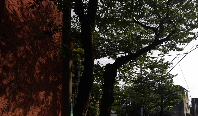 f:id:kujoyugo:20170506173042j:plain