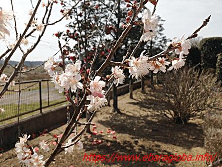 f:id:kukiha-na:20190322224725p:plain