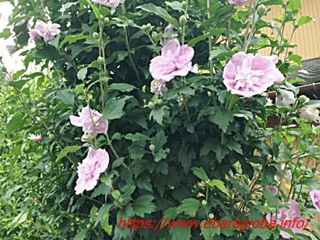f:id:kukiha-na:20190709000250p:plain