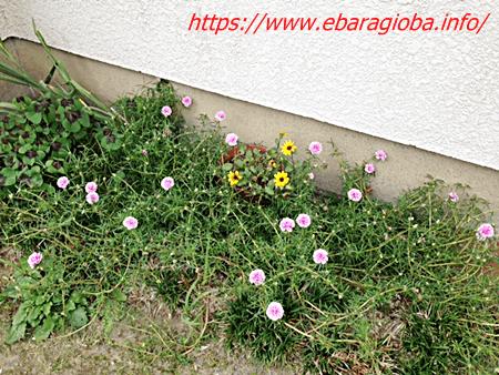 f:id:kukiha-na:20191006213656p:plain