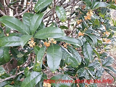 f:id:kukiha-na:20191019212409p:plain