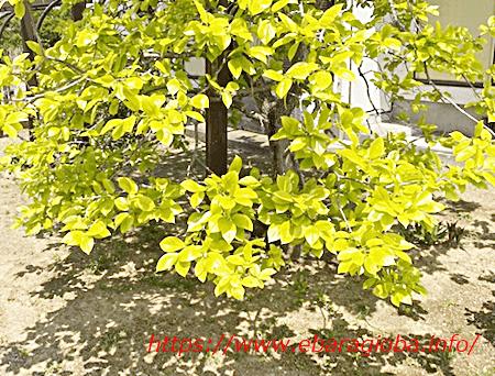 f:id:kukiha-na:20200501122953p:plain