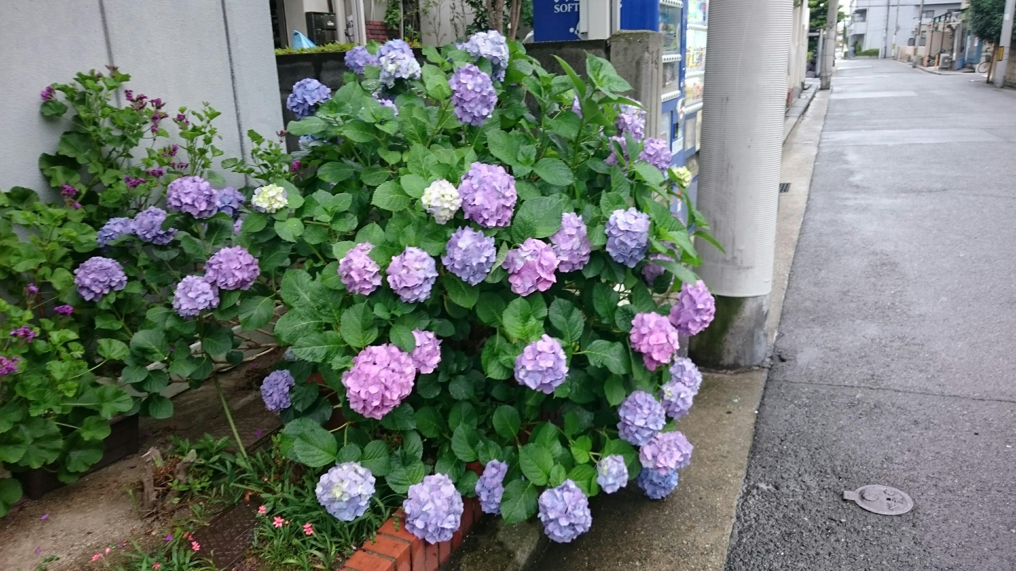 f:id:kukka_suzu:20170602113313j:image