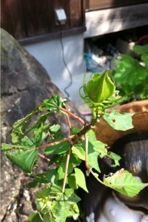 f:id:kukukabu:20110916010923j:image