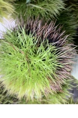 f:id:kukukabu:20110917002125j:image