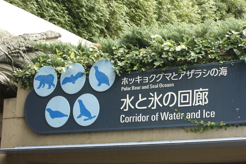 ホッキョクグマとアザラシの海 水と氷の回廊