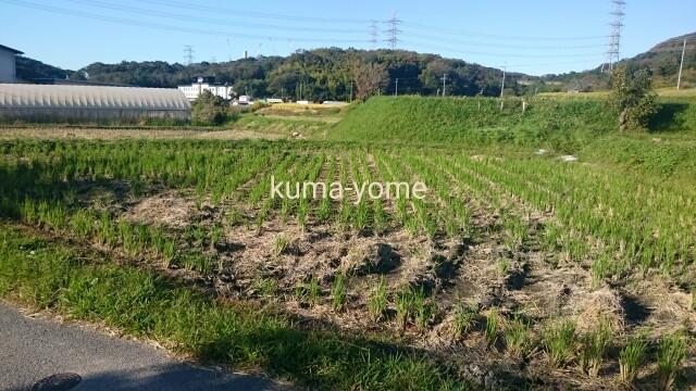 f:id:kuma-yome:20161024214013j:image