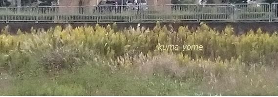 f:id:kuma-yome:20161110181541j:plain