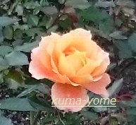 f:id:kuma-yome:20161113204843j:plain