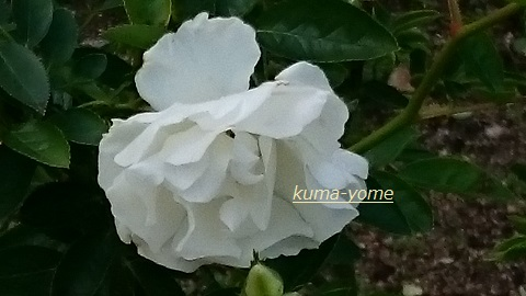 f:id:kuma-yome:20161113204905j:plain