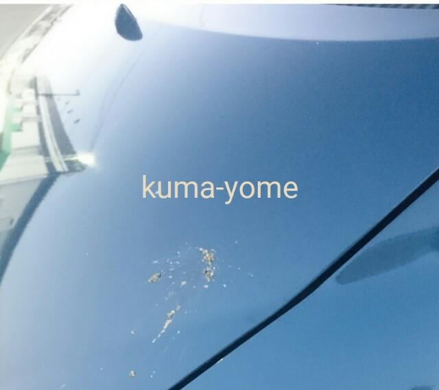 f:id:kuma-yome:20161116214231j:image