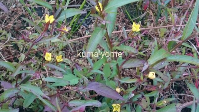 f:id:kuma-yome:20161118190659j:image