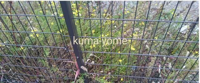 f:id:kuma-yome:20161120232442j:image